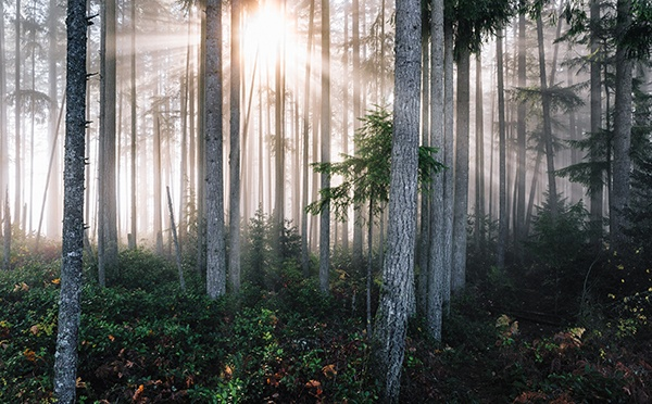 Morning sun looking through the trees in a forrest